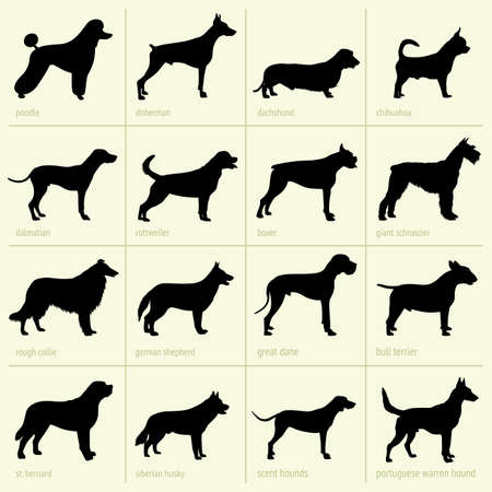 boxer dog: Diferentes razas de perros
