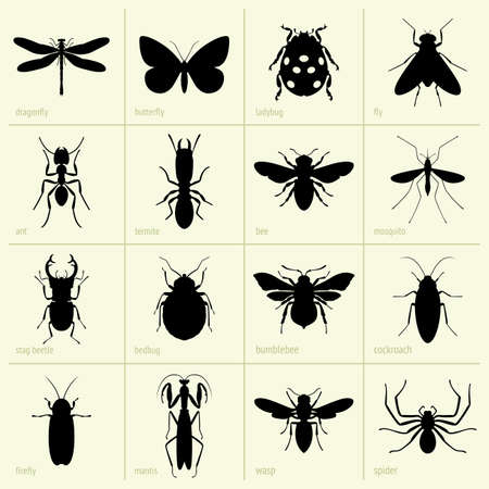 firefly: Set of insects Illustration