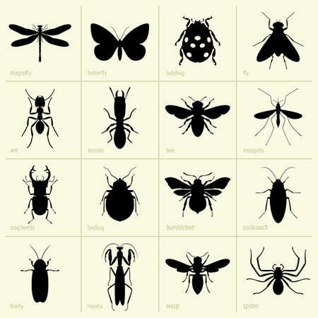 käfer: Set von Insekten