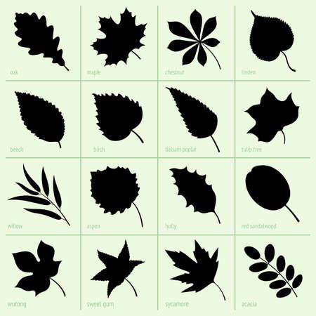 arbol alamo: Conjunto de hojas Vectores
