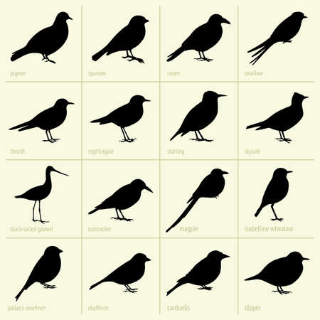 thrush: Set of birds Illustration