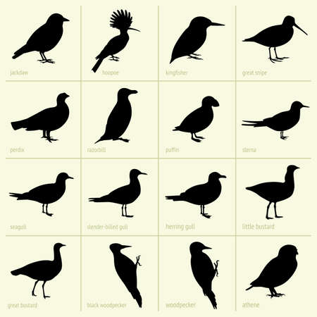 puffin: Set of birds Illustration