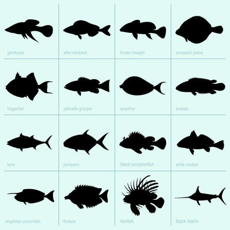 trigger fish: Set of sea fish icons