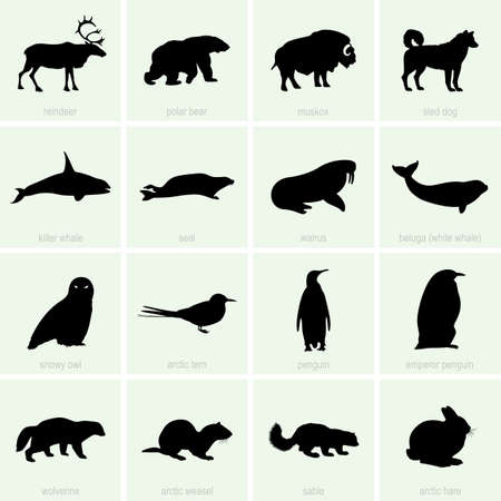 Polar animal icons Vector
