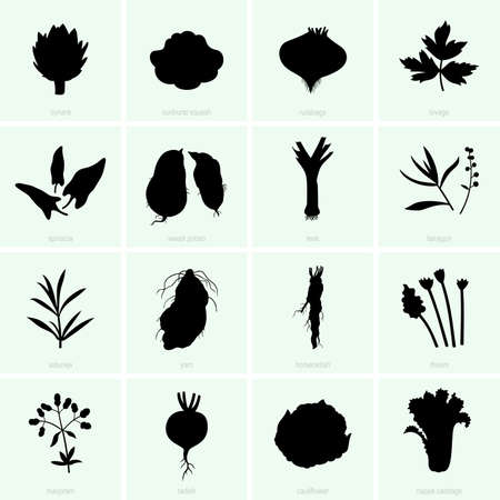 Set of vegetables Stock Vector - 24027094