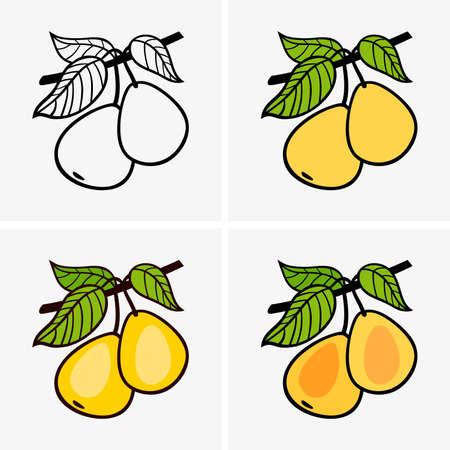 natural color: Pears Illustration