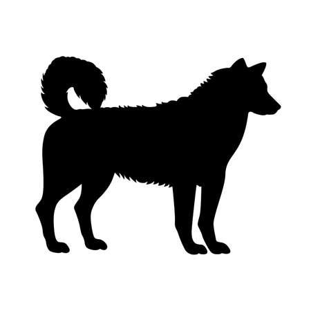 perro de trineo, cortina cuadro