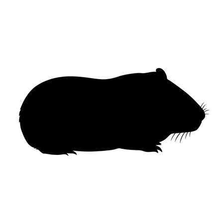 guinea pig: Guinea pig, shade picture Illustration