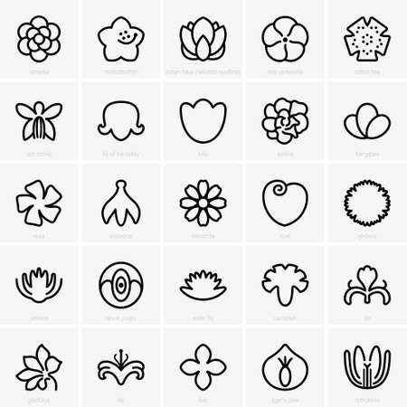 tiger lily: flower icons
