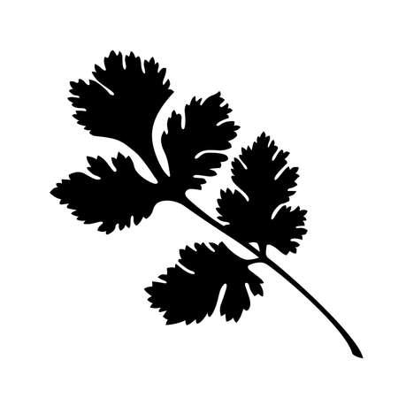Coriander silhouette