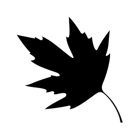 sycamore leaf: sycamore leaf