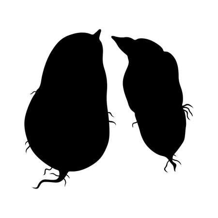 ipomoea: Sweet potatoes, shade pictures