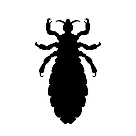 head louse: head louse
