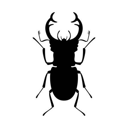male animal: stag beetle Illustration