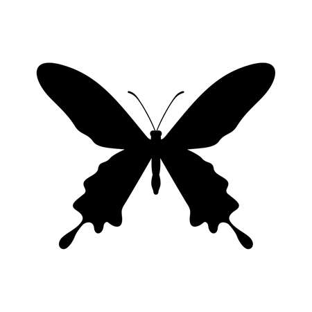 insect flies: BUTTERFLY