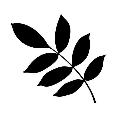ash tree: Artistic ash tree leaf. Illustration