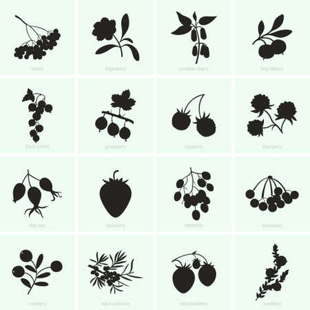 Set of various berries icons