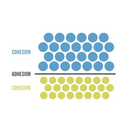 Zusammenhalt und Adhäsion