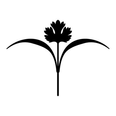 Coriandolo (microverde biologico)