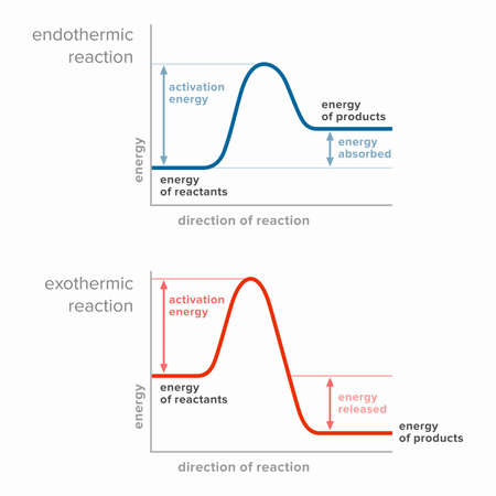 Activation energy in endothermic and exothermic reactions.
