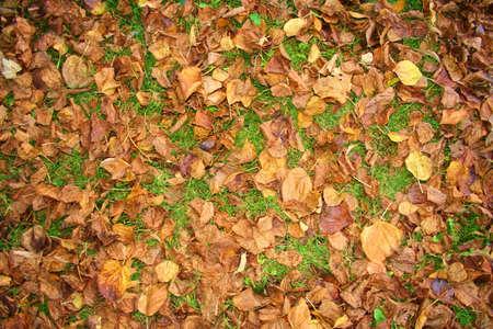 Autunno, foglie secche