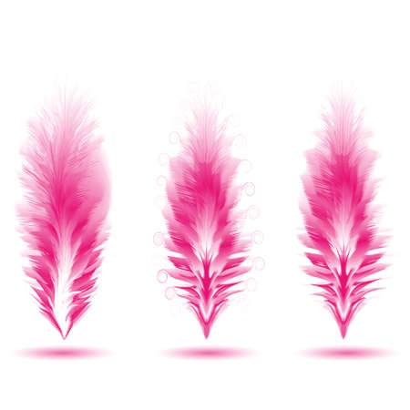 Set of different feathers of birds. Feathers like brushes. Unique brushes. Vector illustration