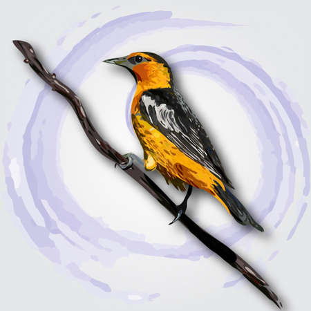 small flock: Oriole isolated on white background. Vector