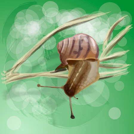 Realistic snail on a dry branch. Vector illustration