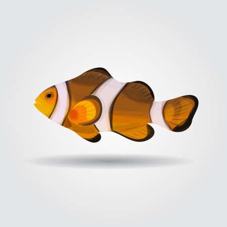anemonefish: Reef fish, clown fish fish isolated on white background