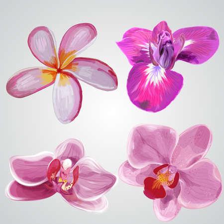 Set of flowers. Plumeria,iris, orchid. Vector