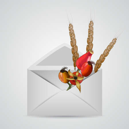 rose hips: Envelope with autumn berries and wheat . Isolated vector illustration. Illustration