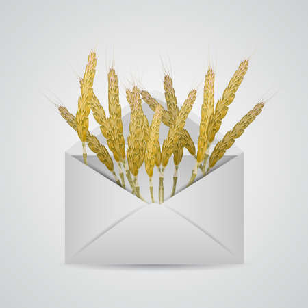 correspondence: Envelope with wheat. Isolated vector illustration.