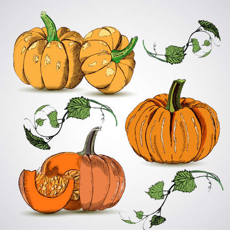 Different varieties of pumpkins Ilustracja