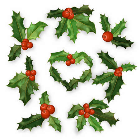 Holly berry leaves Christmas symbol set . Vector design