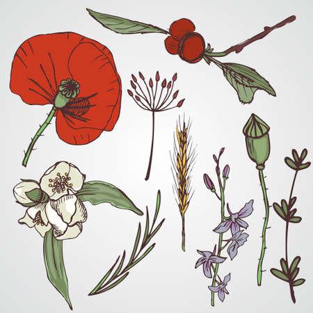 Floral elements setA grande coleção de flores e plantas. Flores e plantas selvagens livres