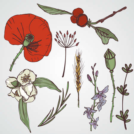 Floral elements setA big collection of flowers and plants. Wild free fowers and plants