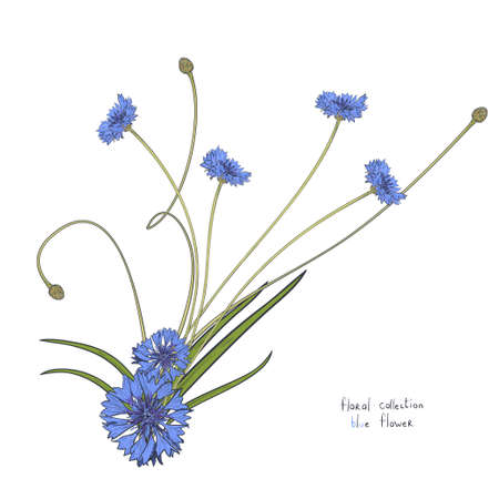 Floral wreath with stylized blue flowers of cornflowers and green leaves. Hand drawn vector illustration isolated on white background.