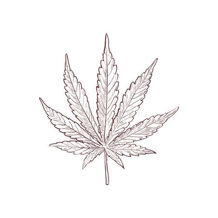 Marijuana or cannabis vector leaf in doodle style