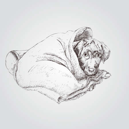 Cute puppy under the blanket