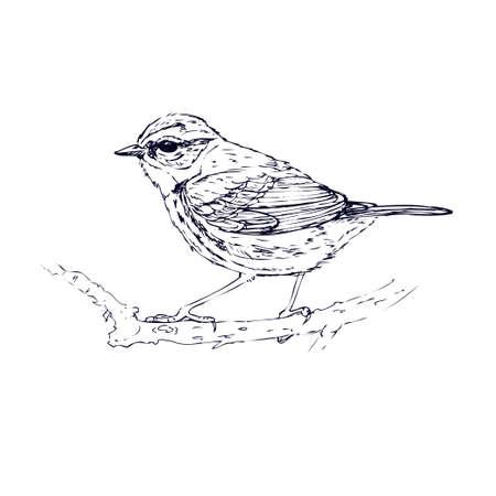 Bird isolated on a white background. Bluebird hand drawn. Sketch Vektoros illusztráció
