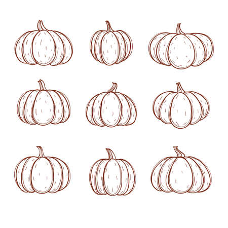 Pumpkin set. Different shapes and sizes gourd isolated on white background. Vector illustration