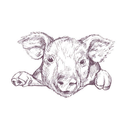 Pig. Sketch. Hand drawn vector illustration