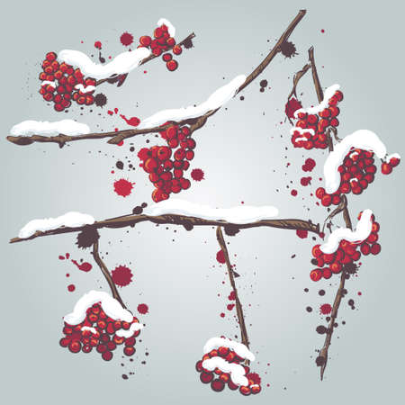 Set of rowan branches with the snow on them. Frozen tree branches, rowan berry, snowfall. Cartoon doodle style. Vector illustration