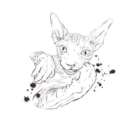 cat breed Sphynx face sketch vector illustration