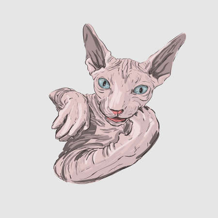 cat breed Sphynx face sketch vector illustration