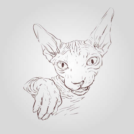 Vector hand drawn llustration of cat sphynx