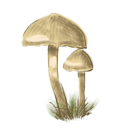 Mushrooms.Mashroom sketch cartoon vector illustration 向量圖像