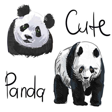 Panda animal .Vector Asian panda bear. Panda isolated on a white bacjground 向量圖像