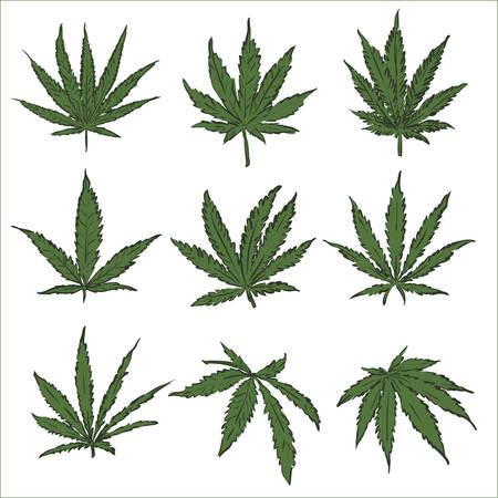Marijuana hemp pot cannabis leaf vector set. Green medical or drugs hempen leaves like grass. 向量圖像