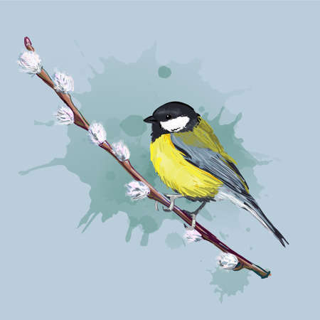 Colorful bird sitting on willow branch. Titmouse. Vector illustration. Artistic style